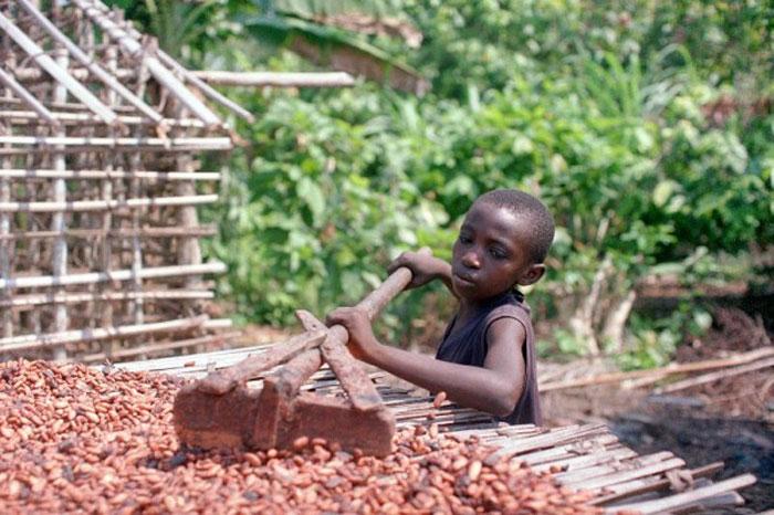 Niño trabajando en el secado de los granos del cacao