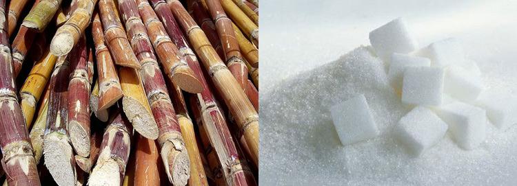 Caña de azúcar y azúcar refinado