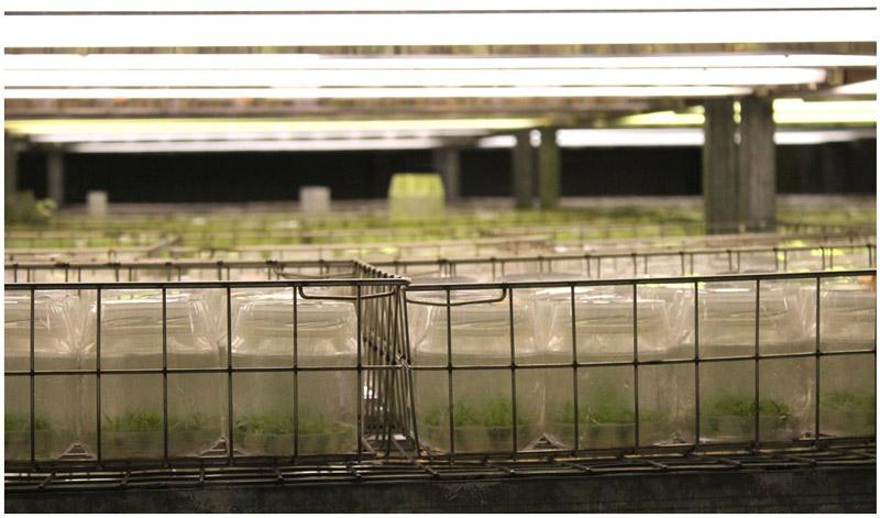 Fotografía III Jornada Fomento y Mejora del Cultivo del Algarrobo