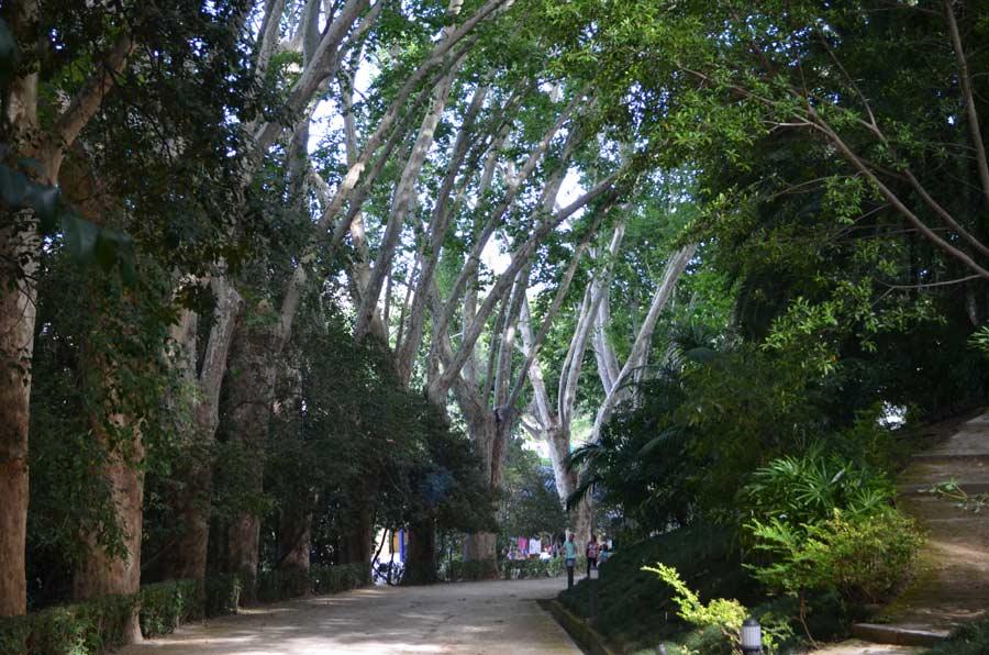 Jardín Botánico-Histórico de Málaga