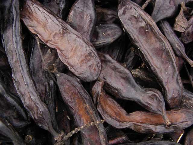 algarrobas